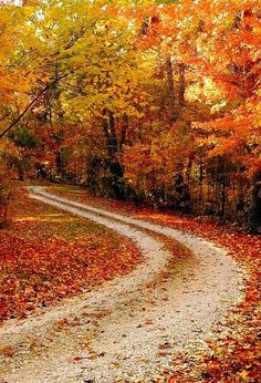Finding my way to look and  get lost in Fall season. How I love the Fall.