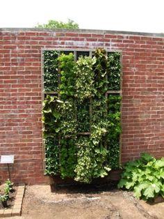 vertical garden by patti.emeigh