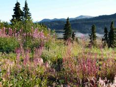 alaska roadtrip, cassiar highway, northern british, alaska plan, british columbia