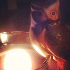 Guardian of the candle.   #owl #candle #cozy # warm owl candl, candl cozi