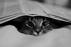 amo gato, cat