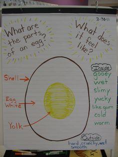 eggs preschool