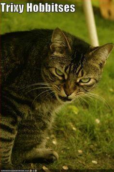 Cat Gollum.