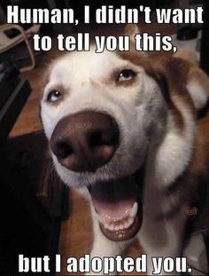 Dogs Adopt Us  #humor   #lol  #funnypuppies  Most funny puppies  http://buymelaughs.com/