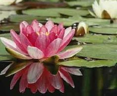 Lotus flower-proof that good things can come out of the muck.