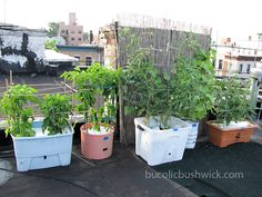 Vegetable Growing Tips for Rooftop Container Gardening