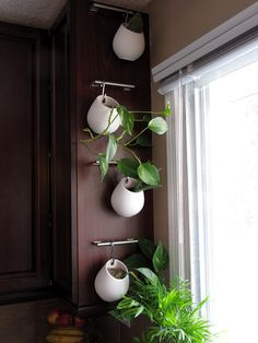 In the kitchen - simple herb garden - handy :)