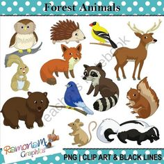 Forest / Woods Animals Clipart from RamonaM Graphics on TeachersNotebook.com -  (36 pages)  - This set contains 12 animals and birds you are likely to find in the woods/forest. Each image is PNG and 300dpi in Black & White, colored with colored outlines and colored with black outlines