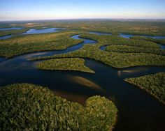 Image detail for -Florida Everglades