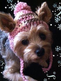 Dog Hat  Crochet by NinasHats on Etsy, $7.00