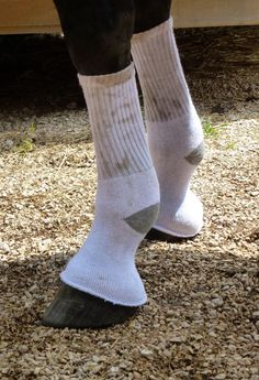 Using human socks to help protect horses legs from bites, etc.  Can also be sprayed with fly spray or diluted essential oils, omg this cracked me up but great idea
