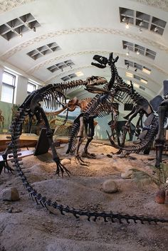 Utah Natural History Museum, SLC, Utah