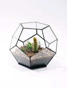 Small hexagon Terrarium