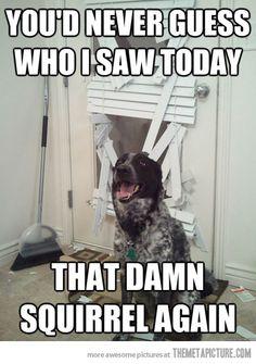 :) anim, laugh, dogs, stuff, pet, funni, humor, puppi, thing