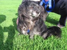 Help Peppy find a new forever home after the passing of her owner.