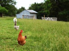 The dream of having a small farm...