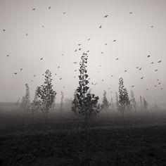 the mist - taykut