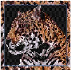 Wild Cat Series Jaguar Wordchart (With First Lines Graphed for Easier Start) Pattern by MaddieTheKat Designs at Bead-Patterns.com