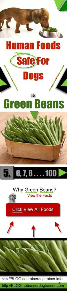 Human Foods Safe For Dogs Green Beans. Green beans are a fantastic resource for dogs nutrition. A Lean dog is a happier, more energetic dog. WHY? (It's not what you think) Find Out More Here http://blog.nobrainerdogtrainer.info/human-foods-safe-for-dogs/