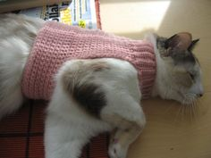 Crochet Pattern: Mock Turtleneck Sweater for Cats    @Krista Melanson...for jasmine? Could be your first project!