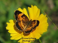 butterfly Photo by Rachael Irvine, Irvine's Place Photography
