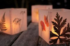 Luminaria by Kelly Wilkinson, author of Weekend Handmade: Place dried leaves and flowers between sheets of wax paper and iron to fuse the paper. Cut out 4 equal squares and fasten with washi tape. #Luminaria #Kelly_Wilkinson