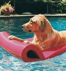 Cesar's Top Summer Tips | Dog Whisperer Cesar Millan