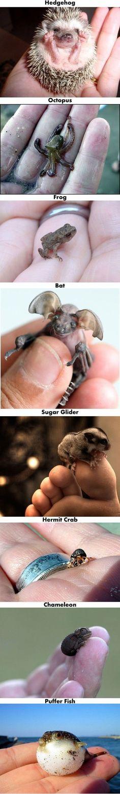 babi anim, stuff, cute baby animals, creatur, amin, bat, ador, tini, thing