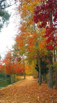 Autumn in East Texas