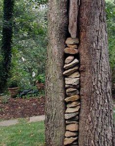 stones and tree