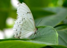 Beautiful white butterfly