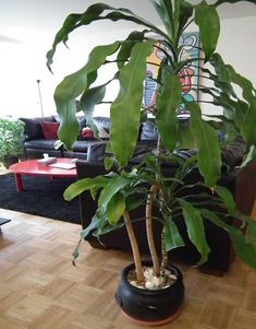 inside plants that clean the air   Green Home Decor that Cleans the Air, Top Eco Friendly House Plants