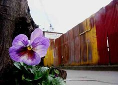 Guerrilla gardener plants in memory of someone who suffered human rights abuse.
