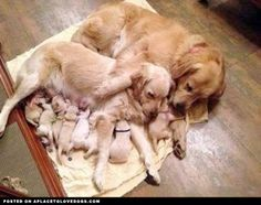 Cuddling Family