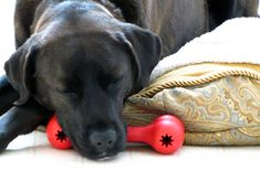 Holiday Safety Pet Tips You Will Love