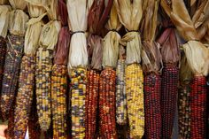 I have always thought Indian corn was something special to look at.  A treat to the eyes.