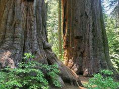 Calaveras Big Trees State Park in California