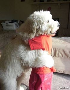 Hugs.. anim, dogs, giant dog, pet, doggi hug, dog hug, puppi, smile, friend