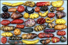 Peruvian spuds..practically every color of the rainbow here.