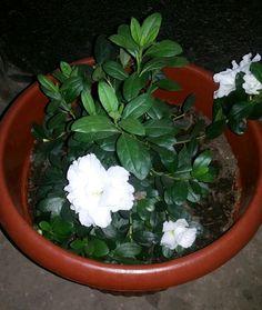 Durante el invierno es considerada tanto planta de jard 237 n como