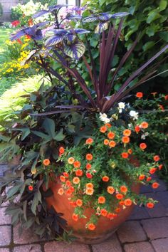 Summer pot summer planters ideas, summer potorang