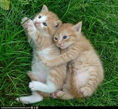 I love orange kittens