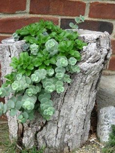 Tree trunk planter using succulents via thelovelyplants