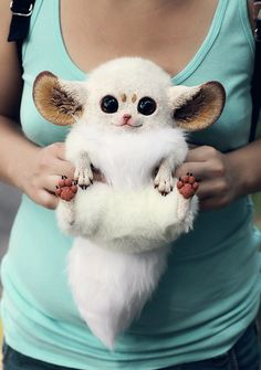 Inari Foxes -WHAT?! It's like Gizmo from Gremlins and Mort from Madagascar had a baby. And it was adorable.