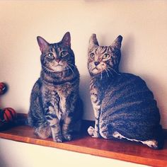 Dopplegangers! #cats #decor