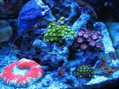 coral fluorescence | coral fluorescence