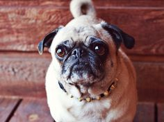 Diy studded dog collar