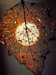 """""""You don't have to be great to start, but you have to start to be great."""" — Joe Sabah Lights, Harvest Moon, Nature Beauty, Fall Leaves, Autumn Leaves, Sunsets, Skeletons, Photography, Golden Age"""