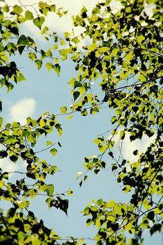 photography // summer art // nature print Breezy