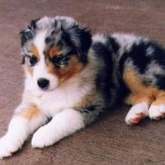 Download Medium Dog Breeds That Don T Shed Images Frompo